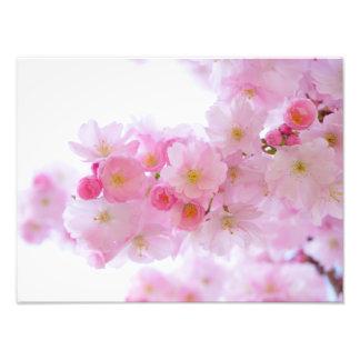 Japanese Cherry Blossom Photo Print