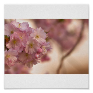 Japanese cherry blossom poster