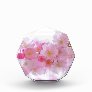 Japanese Cherry Blossoms Flowers Pink Nature Art Award