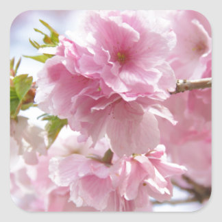 Japanese cherry blossoms square sticker