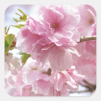 Japanese cherry blossoms square sticker