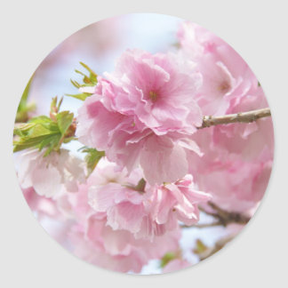Japanese cherry blossoms シール・ステッカー
