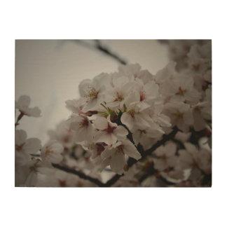 Japanese Cherry Blossoms Wood Print