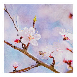 Japanese Cherry - Sakura In Bloom Poster