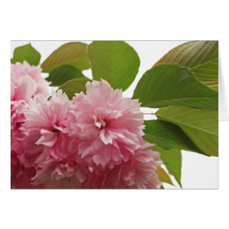 Japanese Cherry Stationery Note Card