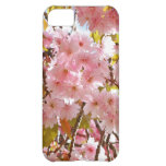 Japanese cherry tree blossom cover for iPhone 5C