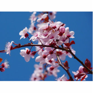 Japanese Cherry Tree Blossom Photo Cut Out