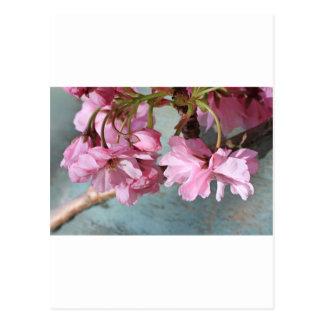 Japanese cherry tree blossom postcard