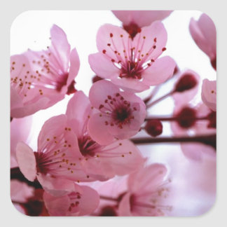 Japanese Cherry Tree Blossoms Square Sticker