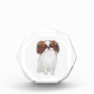 Japanese Chin brown-white Acrylic Award
