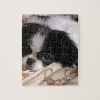 Japanese_chin puppy.png puzzle