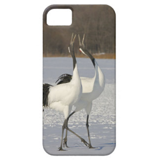 Japanese Cranes dancing on snow iPhone SE/5/5s Case