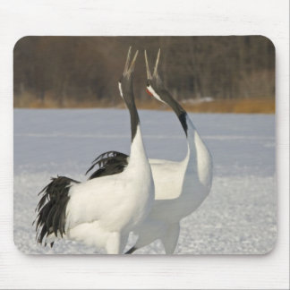Japanese Cranes dancing on snow Mouse Pad