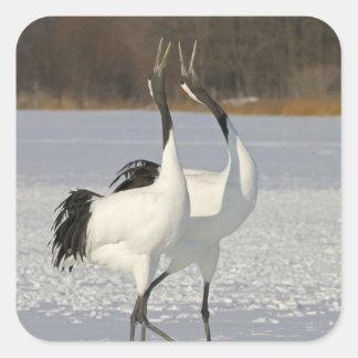 Japanese Cranes dancing on snow Sticker