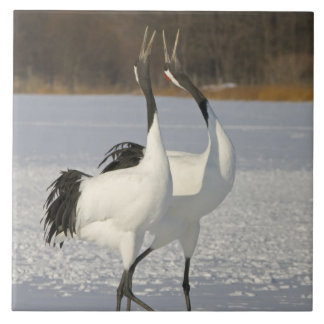 Japanese Cranes dancing on snow Tile
