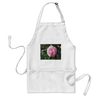 Japanese cultivar of pink Camellia japonica Adult Apron