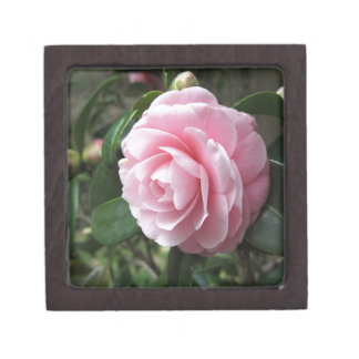 Japanese cultivar of pink Camellia japonica Jewelry Box