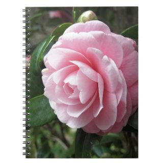Japanese cultivar of pink Camellia japonica Notebook