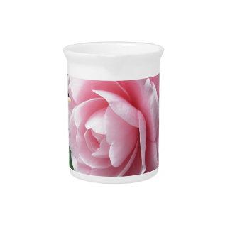 Japanese cultivar of pink Camellia japonica Pitcher