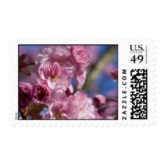 Japanese Flowering Cherry Postage