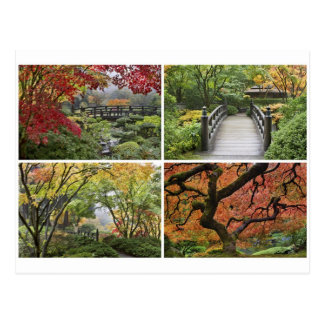 Japanese Garden in Colorful Autumn Season Postcard