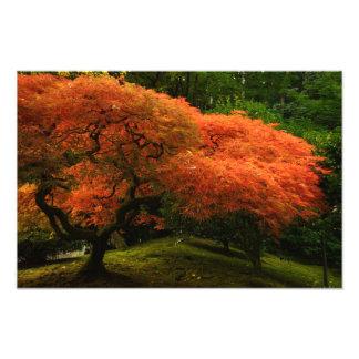 Japanese Garden in the Autumn Art Photo