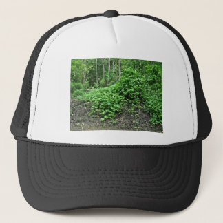 Japanese hops trucker hat
