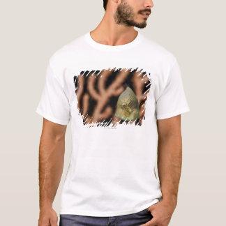 Japanese inflator filefish (Brachaluteres T-Shirt