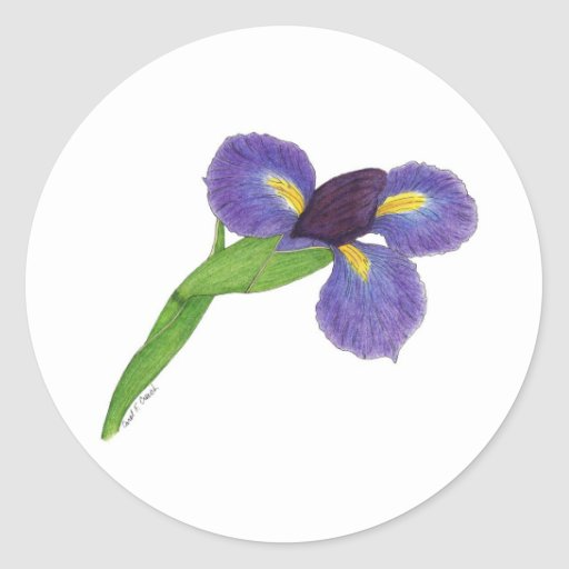 Japanese Iris Blossom Classic Round Sticker