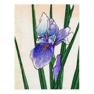 Japanese Iris no.2 Postcard
