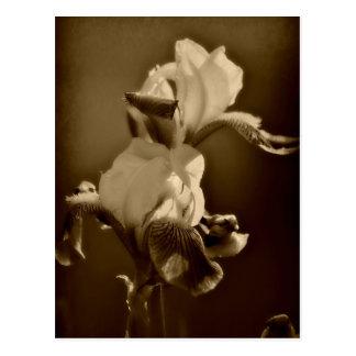 Japanese iris postcards