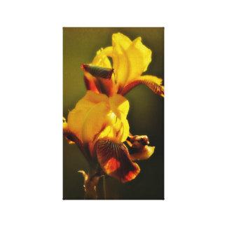 Japanese Iris Stretched Canvas Prints