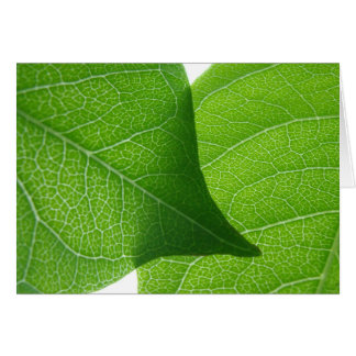 Japanese Knotweed Subtractive Card