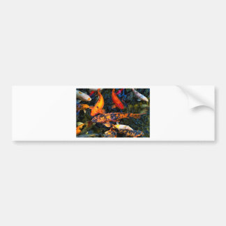 Japanese Koi - Cyprinus carpio haematopterus Bumper Sticker
