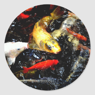 Japanese Koi Fish Bright Orange White Photo Design Classic Round Sticker