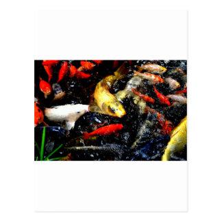 Japanese Koi Fish Bright Orange White Photo Design Postcard