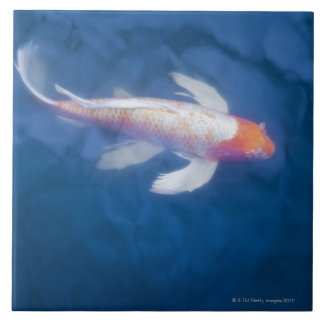 Japanese koi fish in pond, high angle view ceramic tile