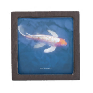 Japanese koi fish in pond, high angle view jewelry box