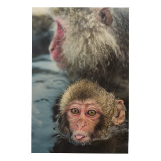 Japanese Macaque Baby Wood Wall Art