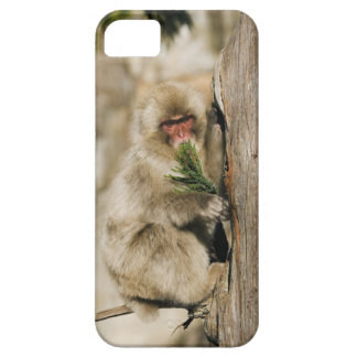 Japanese Macaque Climbing Tree, Eating Leaves iPhone SE/5/5s Case