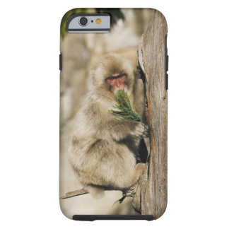 Japanese Macaque Climbing Tree, Eating Leaves Tough iPhone 6 Case