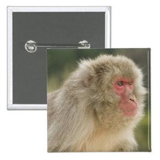 Japanese Macaque Macaca fuscata), also known Button