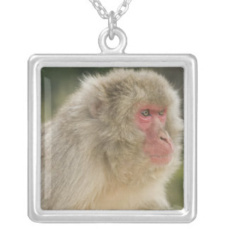 Japanese Macaque Macaca fuscata), also known Silver Plated Necklace