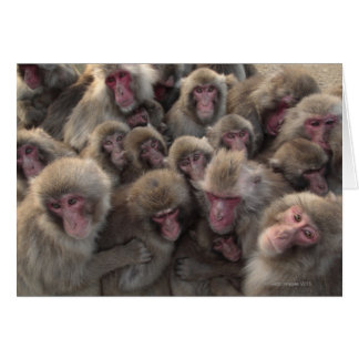 Japanese macaque (Macaca fuscata) huddled Card