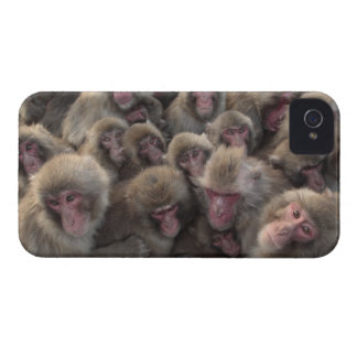 Japanese macaque (Macaca fuscata) huddled iPhone 4 Case-Mate Case