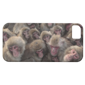 Japanese macaque (Macaca fuscata) huddled iPhone SE/5/5s Case
