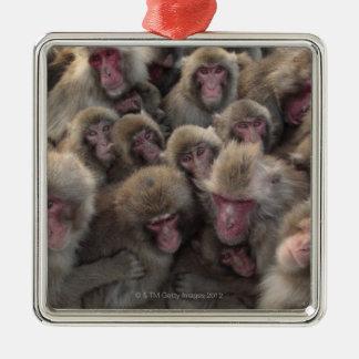 Japanese macaque (Macaca fuscata) huddled Christmas Ornaments