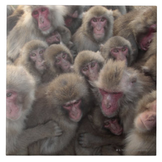 Japanese macaque (Macaca fuscata) huddled Ceramic Tile