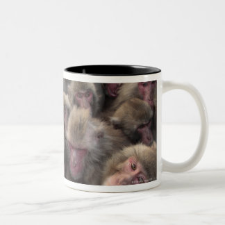 Japanese macaque (Macaca fuscata) huddled Two-Tone Coffee Mug