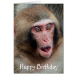 Japanese Macaque Monkey Birthday Card Greeting Card